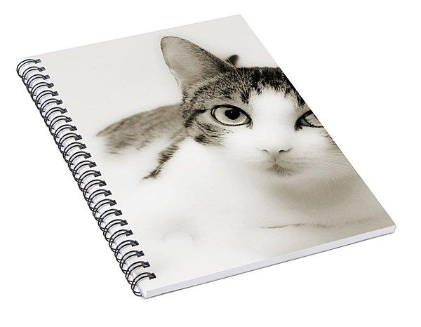 Dreamy Cat 2 Spiral Notebook