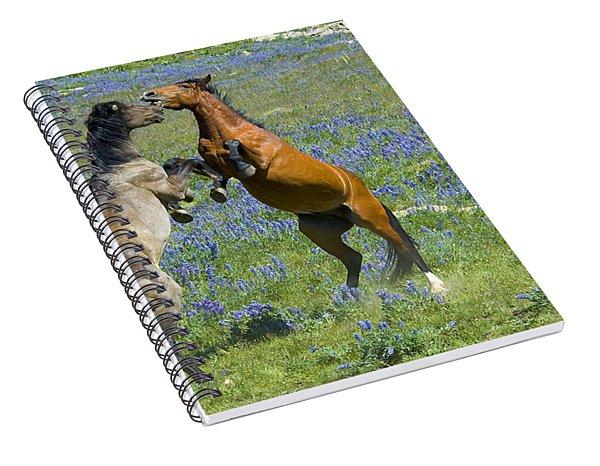 Dueling Mustangs Spiral Notebook