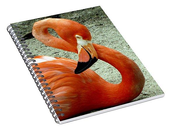 Figure Eight Flamingo Spiral Notebook