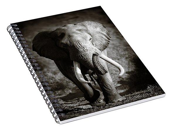 Elephant Bull Spiral Notebook