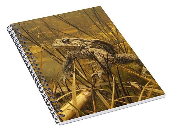 European Toad Noord-holland Netherlands Spiral Notebook