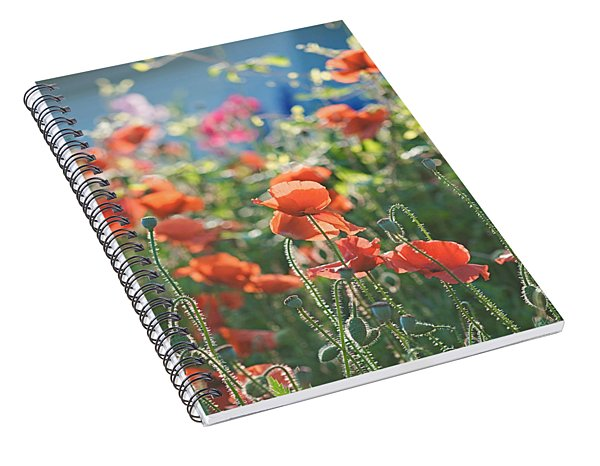 Evening Lights The Poppies Spiral Notebook