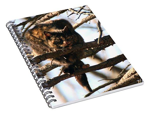 Feral Cat In Pine Tree Spiral Notebook