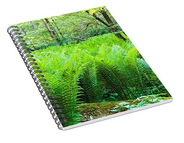 Forest Ferns   Spiral Notebook