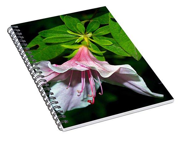 Fragile Beauty Spiral Notebook