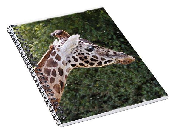 Spiral Notebook featuring the digital art Giraffe 01 by Paul Gulliver