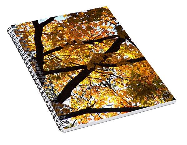 Spiral Notebook featuring the photograph Golden Backlit by Kristen Fox