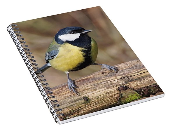 Great Tit On A Log Spiral Notebook