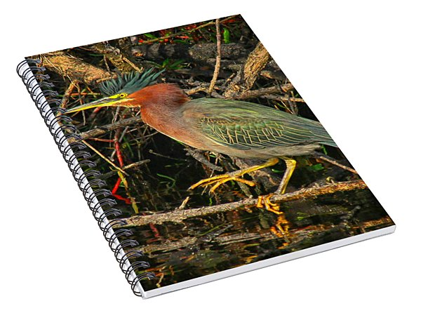 Green Heron Basking In Sunlight Spiral Notebook