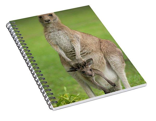 Grey Kangaroo And Joey  Spiral Notebook