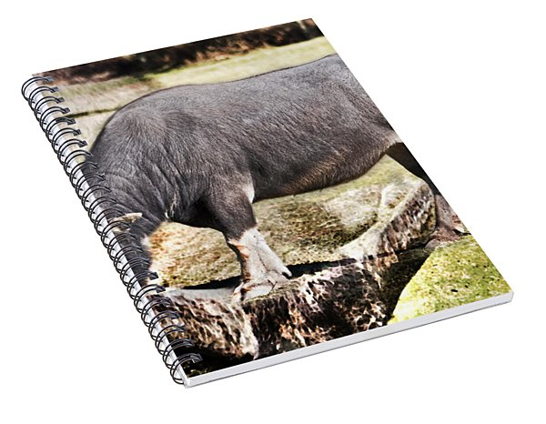 Horn Of A Buffallo Spiral Notebook