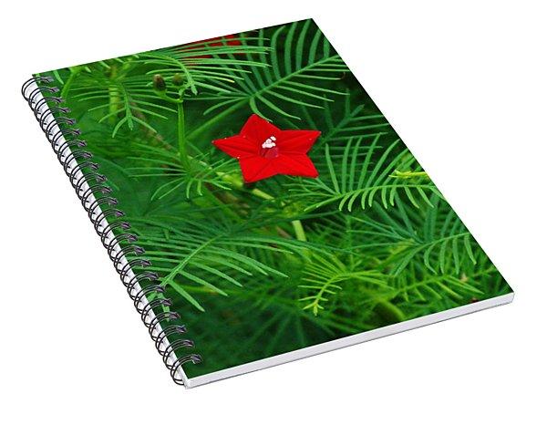 Ipomoea Quamoclit Spiral Notebook