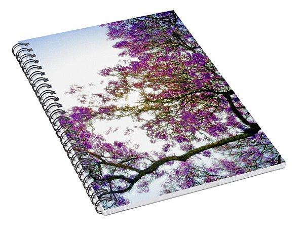 Jacaranda Glory Spiral Notebook