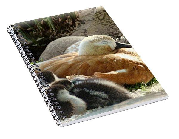 Let Sleeping Ducks Lie Spiral Notebook