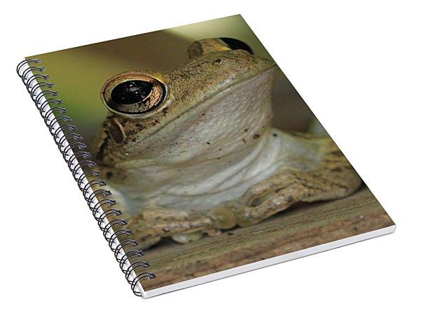Let's Talk - Cuban Treefrog Spiral Notebook