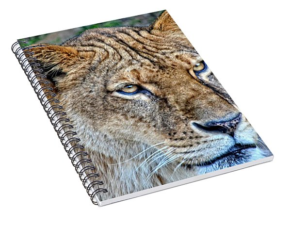Lioness Deep In Thought Hdr Spiral Notebook