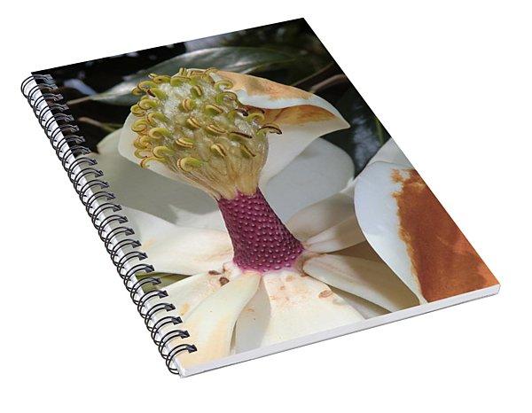 Magnolia Magnicence  Spiral Notebook