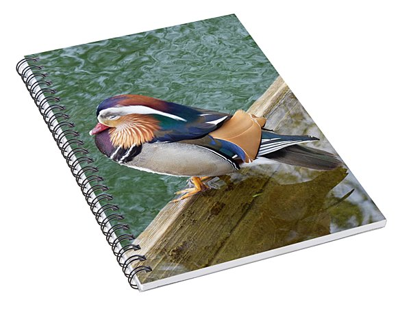 Male Mandarin Duck Sleeping At Pond Edge Spiral Notebook