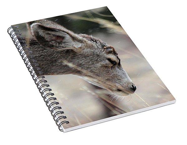 Misery Spiral Notebook