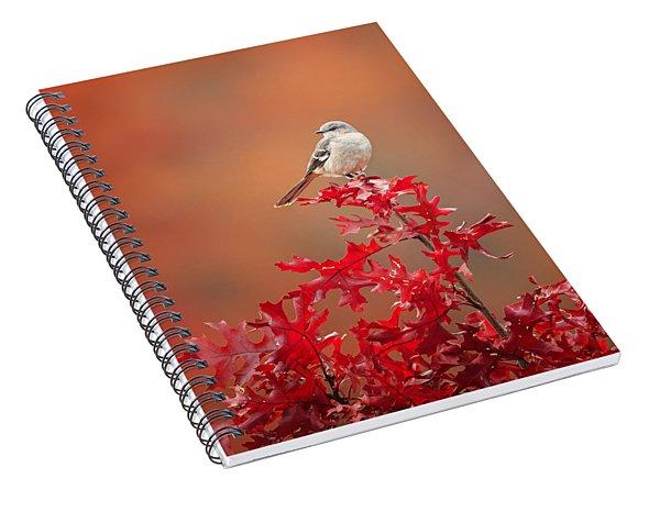 Mockingbird Autumn Spiral Notebook