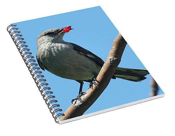 Mockingbird With Berries Spiral Notebook