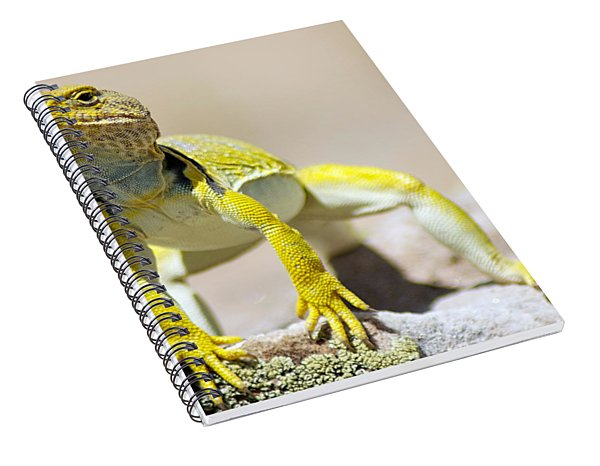 New Photographic Art Print For Sale Yellow Lizard Ghost Ranch New Mexico Spiral Notebook