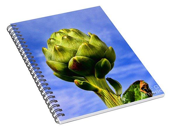 Okey Dokey Artie Choke E Artichokes By Diana Sainz Spiral Notebook