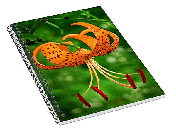 Orange Tiger Lily Spiral Notebook