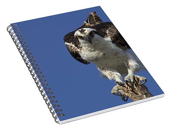 Osprey Photo Spiral Notebook