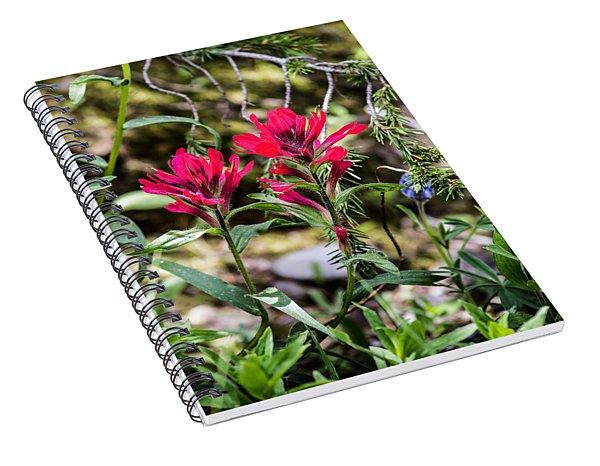 Paintbrush Spiral Notebook