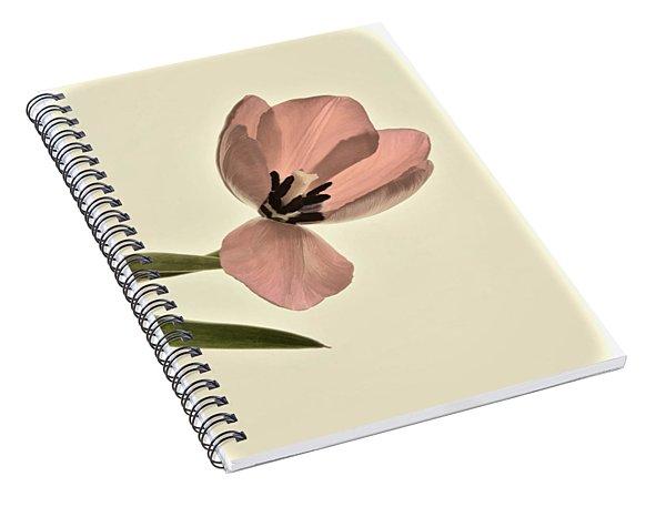 Pale Pink Tulip Spiral Notebook