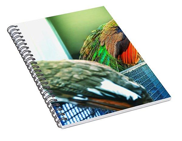 Peacocks Spiral Notebook