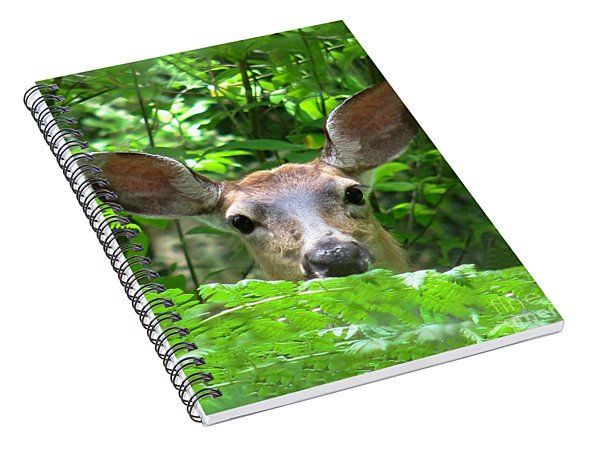 Peek-a-boo Spiral Notebook