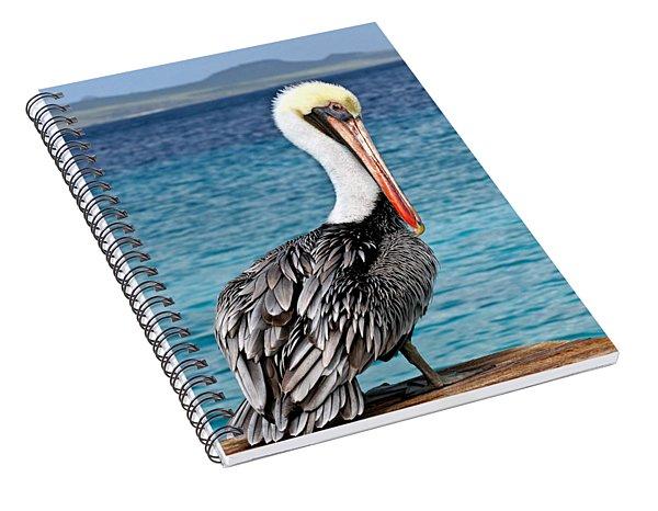 Pelican Portrait Spiral Notebook