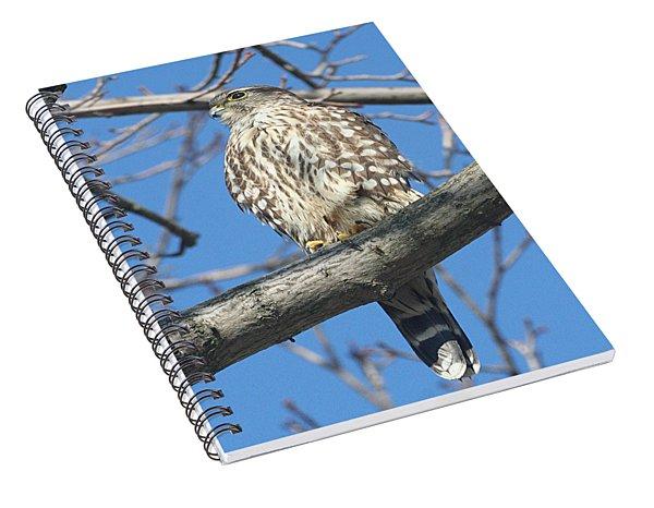 Perched Merlin Spiral Notebook