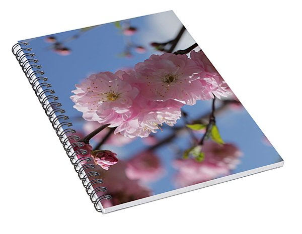 Pink Plum On Sky 2 Spiral Notebook
