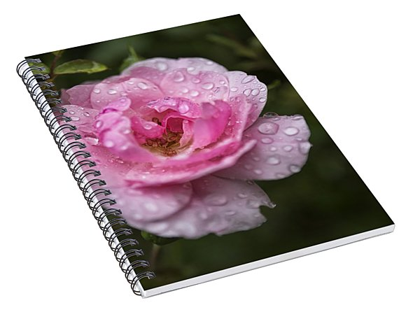 Spiral Notebook featuring the photograph Pink Rose With Raindrops by Belinda Greb