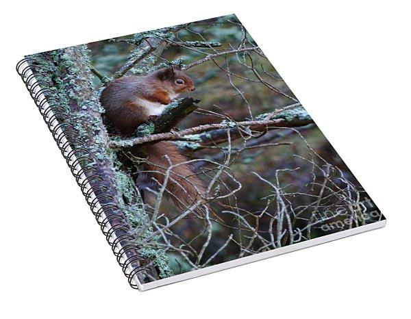 Red Squirrel On Pine Tree Spiral Notebook