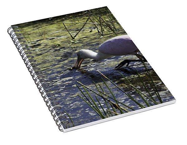 Roseate Spoonbill Ix Spiral Notebook