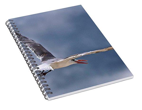 Royal Tern 1 Spiral Notebook