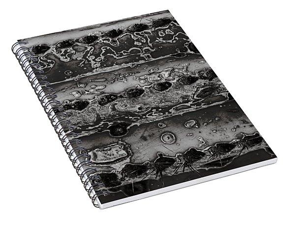 Saguaro Cactus Black And White 2 Spiral Notebook