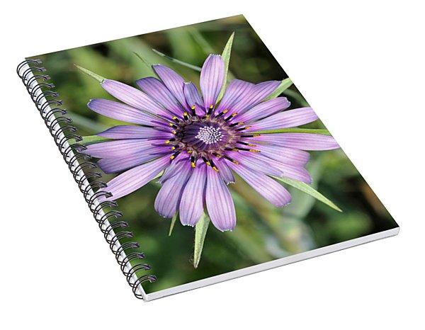 Salsify Flower Spiral Notebook