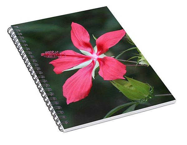 Scarlet Hibiscus #3 Spiral Notebook