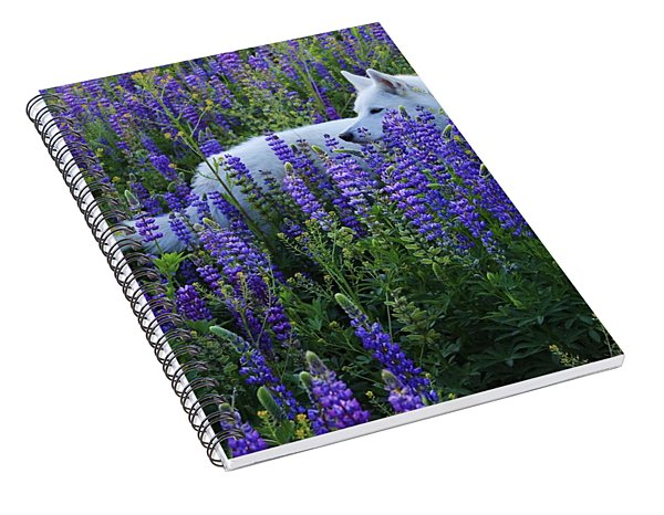 Sekani In Lupine Spiral Notebook
