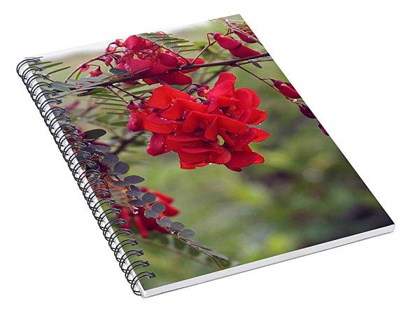 Sesbania Punicea Spiral Notebook