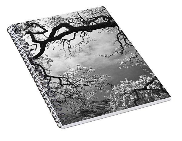 Sheltering Sky Spiral Notebook