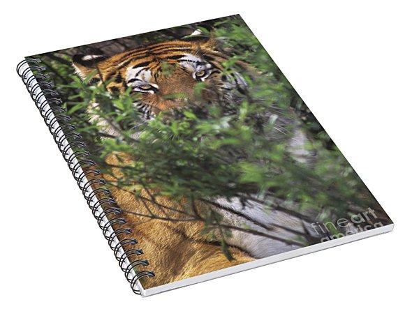 Siberian Tiger In Hiding Wildlife Rescue Spiral Notebook