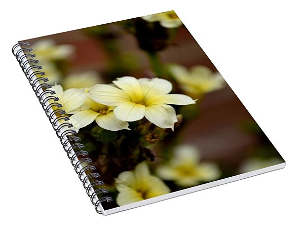 Sisyrinchium Striatum Spiral Notebook