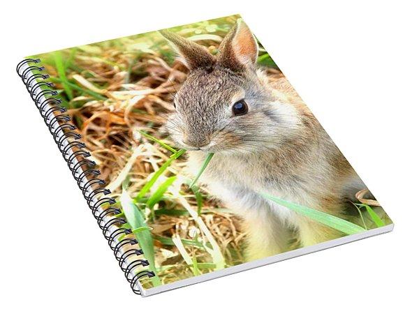 Spring Bunny Spiral Notebook