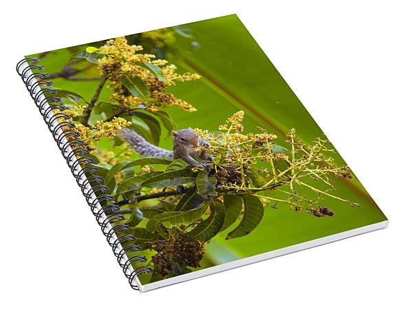 Squirrel In A Tree Spiral Notebook
